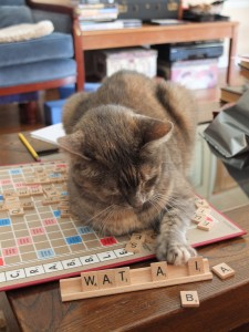 Cat On Scrabble Board